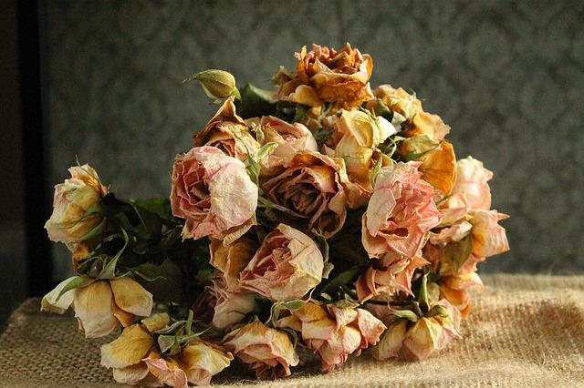 Bouquet de fleurs desséchées